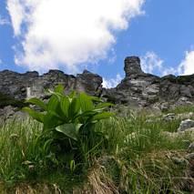 Formacje skalne w Miedzianem