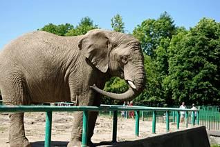 Ten słoń coś by zjadł
