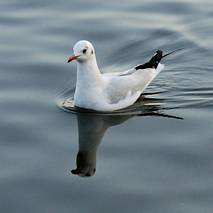 Grzeczny ptaszek
