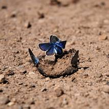 Uczta motyli