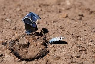 Motyle - jam poległ, a ja lecę...