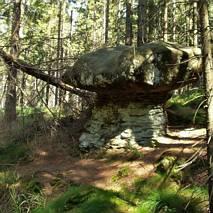 Szlak skalnych grzybów