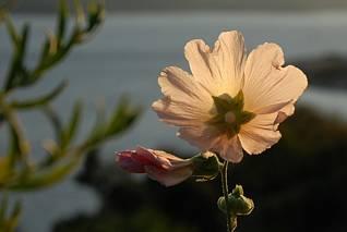 A jaki to kwiat (?)