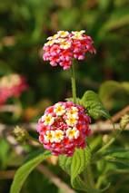Kwiaty na kwiatach