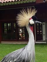 Sympatyczny ptaszek :)