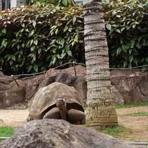 Stary żółw