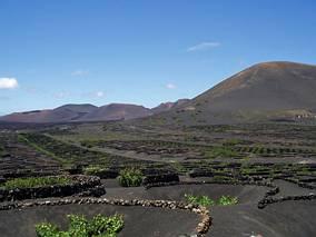 Plantacja winorośli na gruncie wulkanicznym