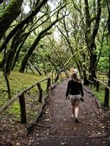 Trzeciorzędowy las na Gomerze