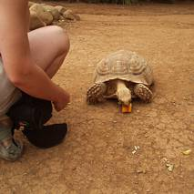 Dokarmiamy żółwia, Exotic Parque