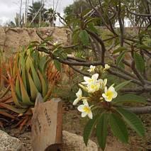 Exotic Parque, Teneryfa
