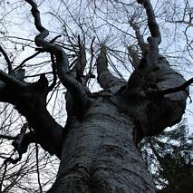 Drzewo - świecznik