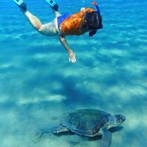 Pływając z żółwiami