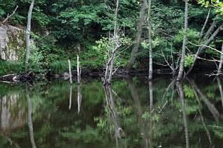 Pod i nad wodą