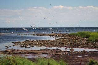 Rezerwat ptaków