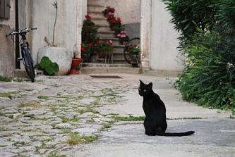 Kociak miejski