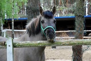 Typowo końskie spojrzenie