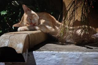 Pospany kotek