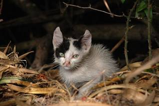 Młodziutki kotek