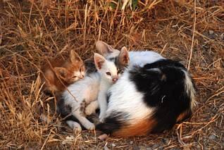 Przywitały nas greckie kociaki