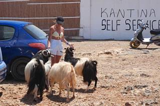Uwaga na kozy!