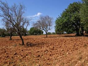 Pola w okolicy Cala Mandrago