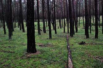 Las Woliński